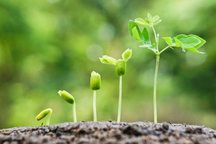 planten afleggen