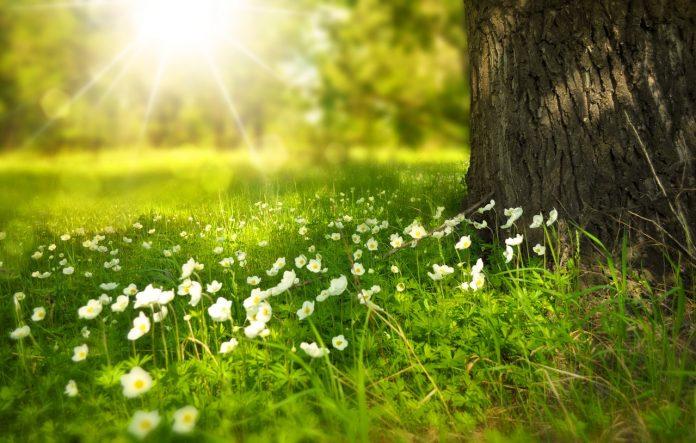 gras met bloemen bij een boom