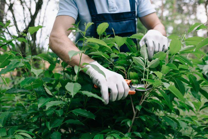 tuinieren met handschoenen