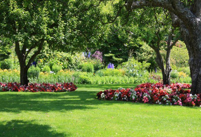 mooie tuin in de zomer